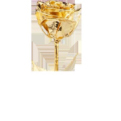 Die vergoldete Rose